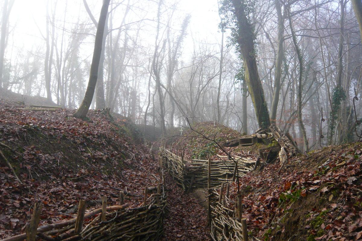 forêt dans l'Oise