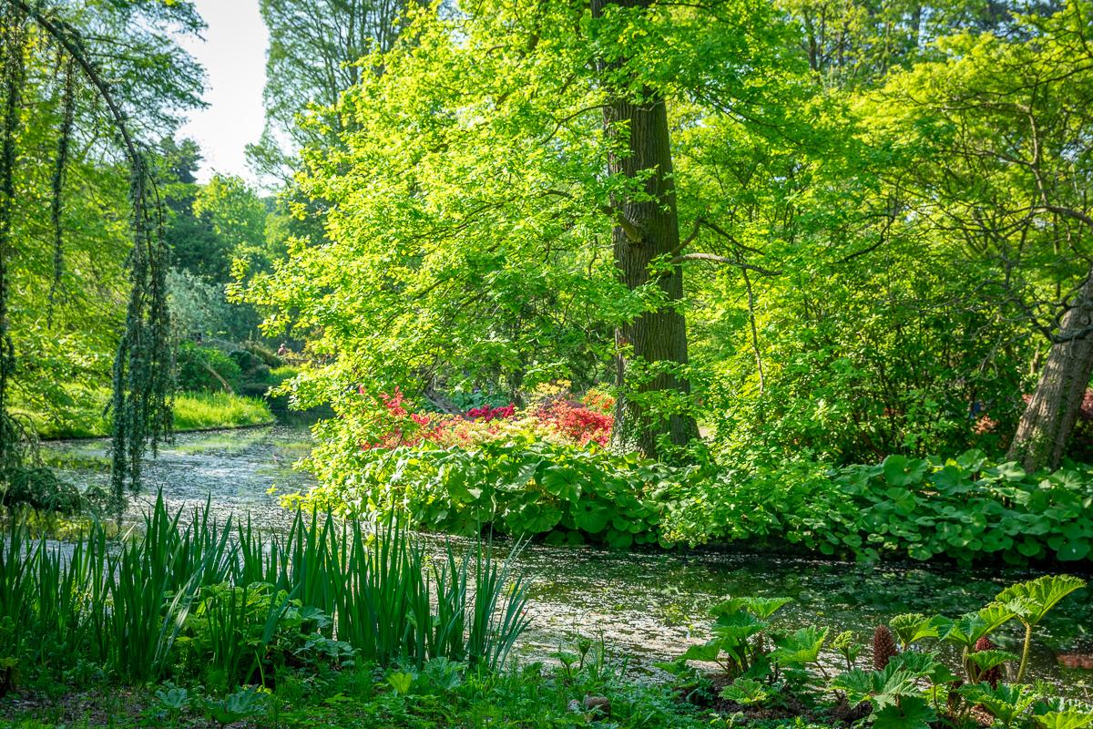 Arboretum été